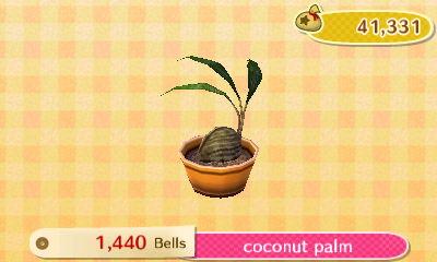 coconut palm new leaf hq